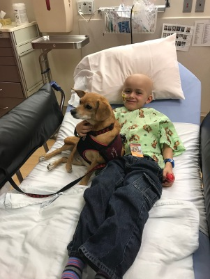 Rosi the therapy dog was a sweet treat before radiation.
