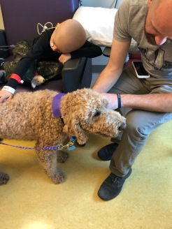 Pet therapy time! Love when the therapy dogs come to visit.