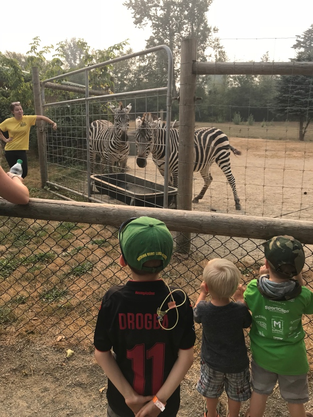 We learned that Zebras are not very nice animals.